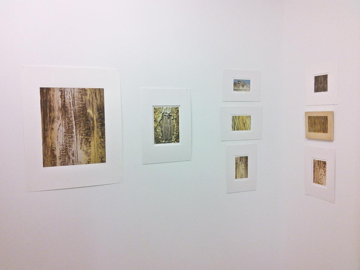 Silkscreened beetle galleries by Bill Horne.